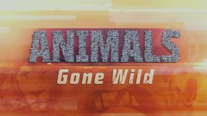 ANIMALS GONE WILD