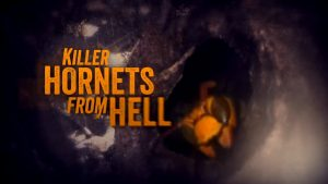 KILLER HORNETS FROM HELL